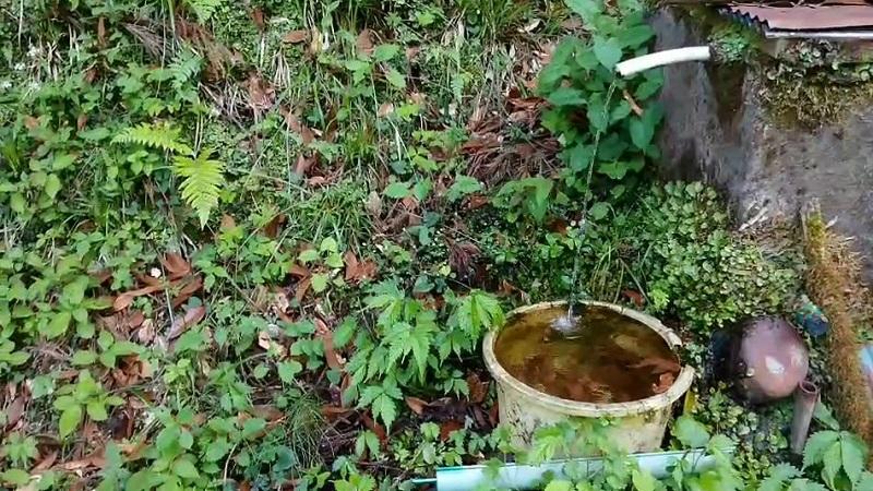 マー坊:弘法大師様の湧き水